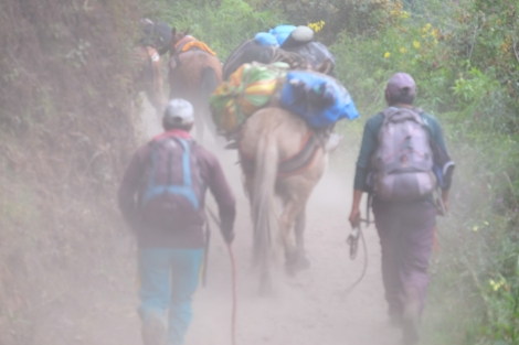Be ready for hordes of mules and locals carrying the luggage for several tourist agencies operating on the Salkantay Trail