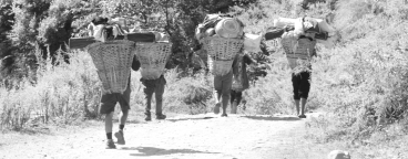 Porters carrying stuff for tourists