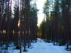 On the Kolinpolku Hiking Trail