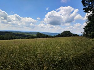 View on the Trail