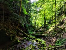 Wolfsschlucht Trail - leading down to the town of Zwingenberg
