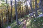Forest near Ramici on an early morning in October - Paklenica National Park, Croatia