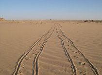 Traces in the Desert Sand of Egypt